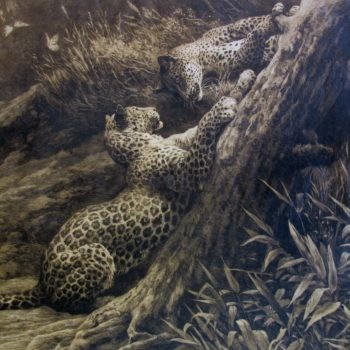 'PLAY' by Herbert Dicksee – Two Leopards on a tree trunk
