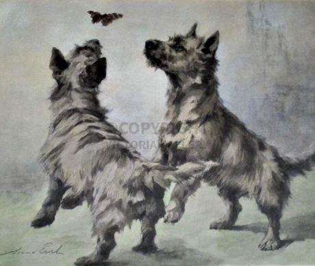 Maud Earl – Rare Cairn Terriers