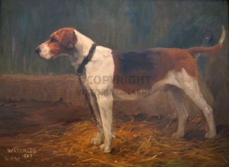 Lucy Kemp-Welch Original 'Foxhound' oil on canvas 1903 (2)
