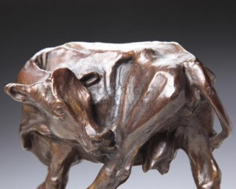 Bronze Dairy Cow Licking Hindleg by Andrew Edmonds