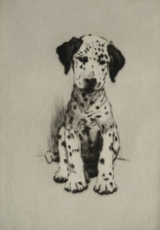 Dalmation Puppy etching by Cecil Aldin