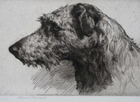 Herbert Dicksee Signed Etching 'A Scottish Deerhound'