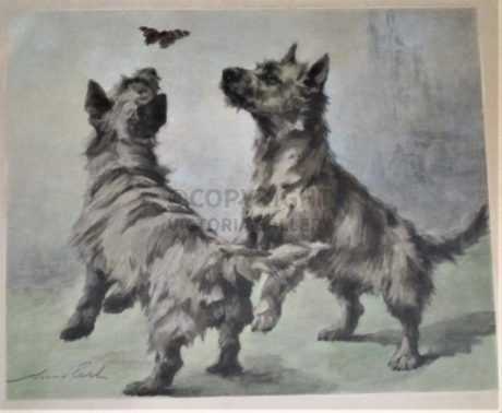 Maud Earl – Antique Print Cairn Terriers