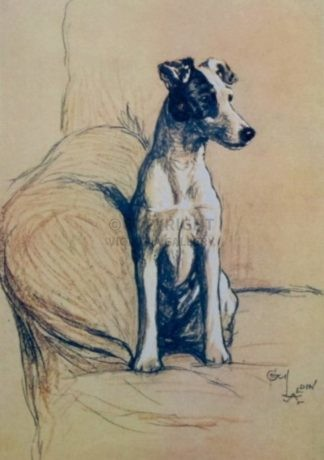 'SMOOTH HAIRED FOX TERRIER' by Cecil Aldin