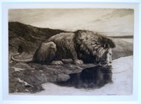 Herbert Dicksee – Early Antique Etching 'LION DRINKING'