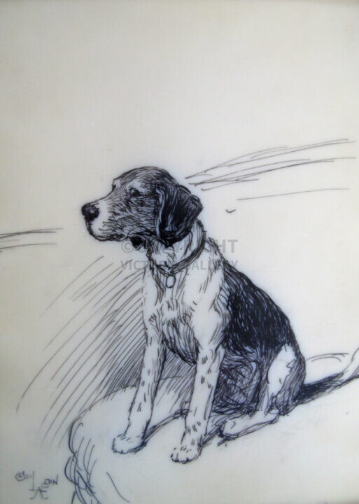 Cecil Aldin. Original. Young Beagle. Pen & ink on Ivorene.