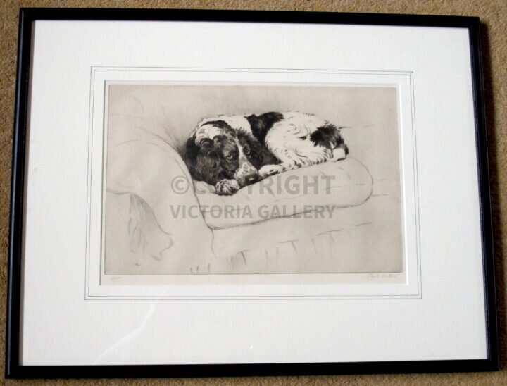Cecil Aldin. Signed ltd ed etching. Springer Spaniel. c1929. E&Sp.
