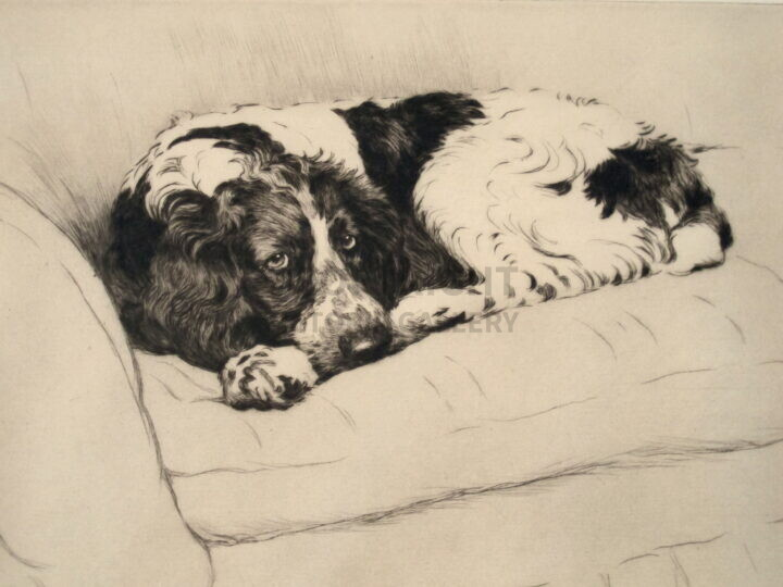 Cecil Aldin. Signed ltd edition. Springer Spaniel on Settee. c1929. E&Sp