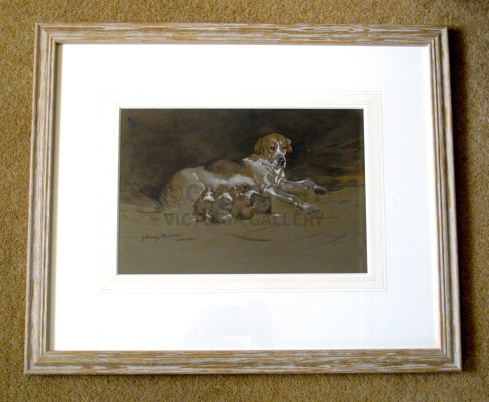 John Murray Thomson RSW., Signed watercolour 'Foxhound & Puppies'